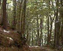 Riserva naturale Coturelle Piccione