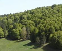 Riserva naturale Gallopane