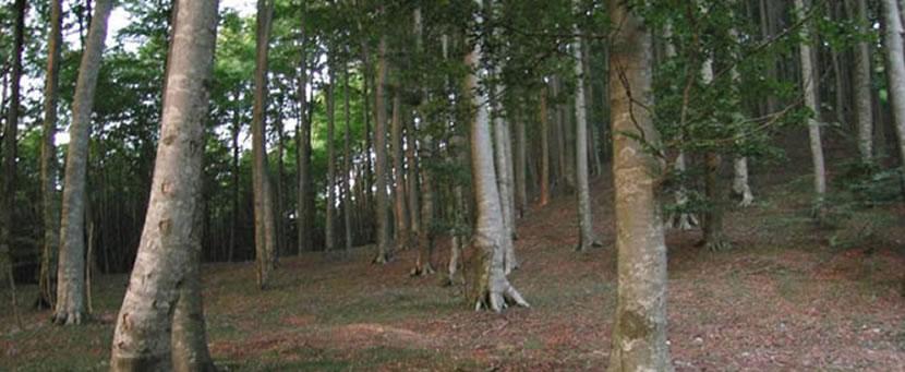 Riserva naturale Serra Nicolino