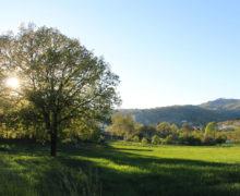Alberi e paesaggi del Reventino