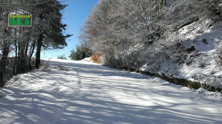 Nevicata sul Monte Botte Donato in Sila, 27 Novembre 2017 - 4