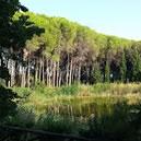 Parco Dossi Comuni