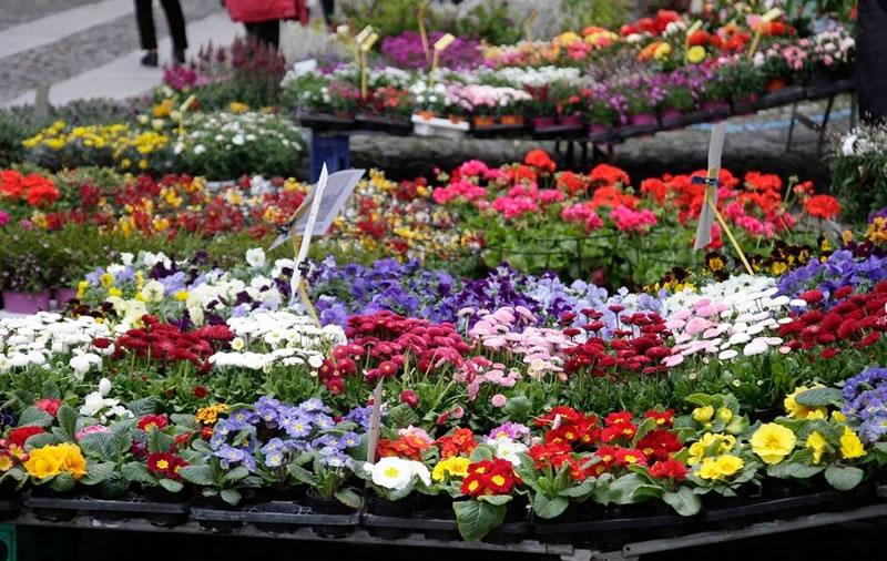 Fiera dei fiori Vibo Valentia