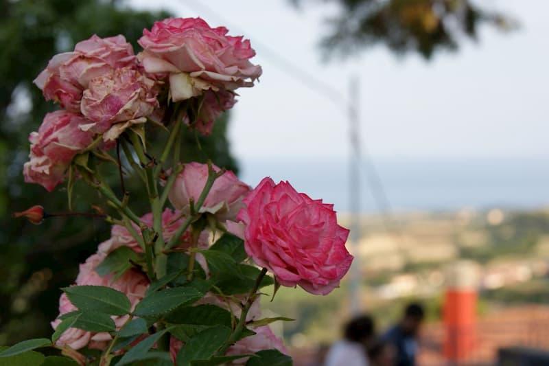 Roseto in Fiore - Angoli e balconi fioriti