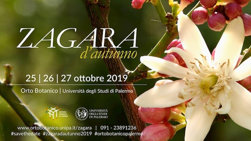 Zagara d'autunno 2019