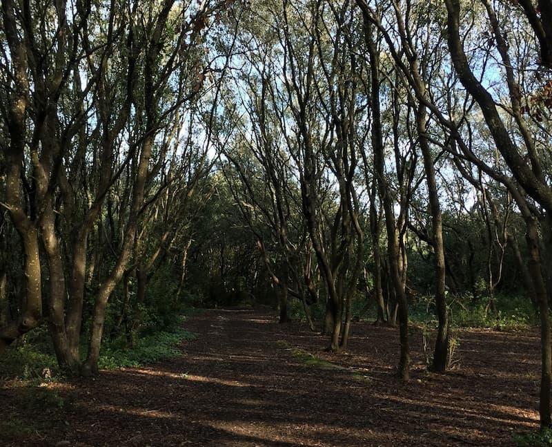 Escursione il Parco Naturale Regionale Bosco